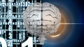 Άσπρος εγκέφαλος με ελαφρύ να λάμψει κύκλων και τους ψηφιακούς αριθμούς διανυσματική απεικόνιση