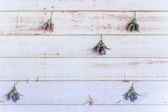Άσπρος εκλεκτής ποιότητας ξύλινος τοίχος Στοκ Εικόνες