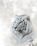 άσπρος ζωολογικός κήπος τιγρών πορτρέτου του Novosibirsk Στοκ Φωτογραφία