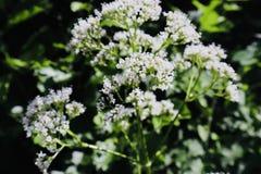 Άσπρος κήπος λουλουδιών όμορφος στοκ φωτογραφία