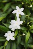 Άσπρος κήπος λουλουδιών Στοκ εικόνα με δικαίωμα ελεύθερης χρήσης