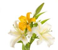 άσπρος κίτρινος κρίνων δε&sig Στοκ φωτογραφία με δικαίωμα ελεύθερης χρήσης