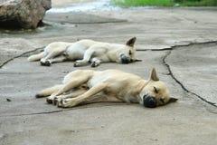 Άσπρος και καφετής ύπνος σκυλιών Στοκ Εικόνα