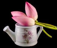 Άσπρος κεραμικός watercan, ψεκαστήρας, με το ρόδινο λωτό, λουλούδια κρίνων νερού, κλείνει επάνω Στοκ Φωτογραφίες
