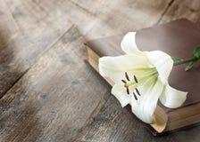 Άσπρος κρίνος στο βιβλίο Στοκ φωτογραφίες με δικαίωμα ελεύθερης χρήσης