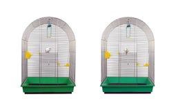 Άσπρος κυματιστός παπαγάλος Στοκ Εικόνα