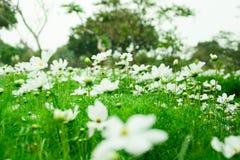 Άσπρος κόσμος στο πάρκο μεταξύ μιας όμορφης ημέρας στο υπόβαθρο θαμπάδων στοκ εικόνα