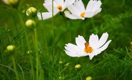 Άσπρος κόσμος, όμορφο λουλούδι και μικροσκοπική πεταλούδα στοκ εικόνα με δικαίωμα ελεύθερης χρήσης