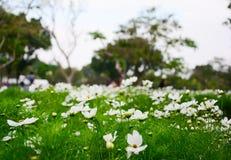 Άσπρος κόσμος, όμορφο λουλούδι στοκ εικόνα