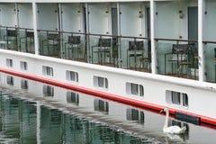 Άσπρος κύκνος με το κρουαζιερόπλοιο Στοκ εικόνες με δικαίωμα ελεύθερης χρήσης