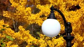 Άσπρος λαμπτήρας οδών στα πλαίσια του κίτρινου φυλλώματος στοκ εικόνα με δικαίωμα ελεύθερης χρήσης