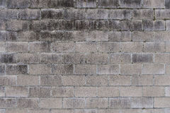 Άσπρος μαραμένος τουβλότοιχος με το βρύο Στοκ εικόνα με δικαίωμα ελεύθερης χρήσης
