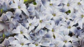 Άσπρος-μπλε ιώδη λουλούδια λεπτομερές ανασκόπηση floral διάνυσμα σχεδίων floral ταπετσαρία για το σχέδιο Στοκ Φωτογραφίες