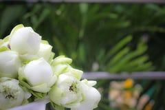 Άσπρος ναός λωτού Στοκ Φωτογραφίες