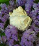 Άσπρος ξηρός αυξήθηκε με τις πτώσεις νερού μεταξύ των ιωδών λουλουδιών στοκ φωτογραφία με δικαίωμα ελεύθερης χρήσης