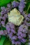Άσπρος ξηρός αυξήθηκε με τις πτώσεις νερού μεταξύ των ιωδών λουλουδιών στοκ εικόνα με δικαίωμα ελεύθερης χρήσης