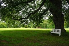 Άσπρος πάγκος πάρκων στη σκιά ενός μεγάλου δέντρου Στοκ εικόνα με δικαίωμα ελεύθερης χρήσης