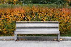 Άσπρος πάγκος στο πάρκο Ζωή σκηνής φθινοπώρου ακόμα ζωηρόχρωμα φύλλα ανασκόπη&sigm Επίδραση μετατόπισης κλίσης Στοκ εικόνες με δικαίωμα ελεύθερης χρήσης