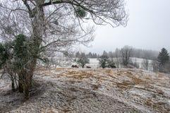 Άσπρος παγετός στο αγρόκτημα αλόγων Στοκ Φωτογραφίες