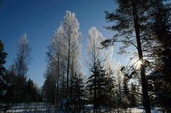 Άσπρος παγετός στο δέντρο στην ηλιόλουστη φινλανδική χειμερινή ημέρα Στοκ Εικόνες
