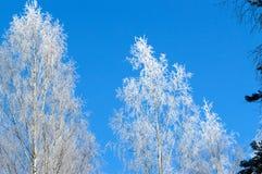 Άσπρος παγετός στο δέντρο στην ηλιόλουστη φινλανδική χειμερινή ημέρα Στοκ φωτογραφία με δικαίωμα ελεύθερης χρήσης