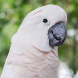 Άσπρος παπαγάλος Στοκ Εικόνες