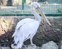 Μεγάλο πουλί τρίο