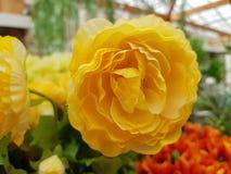 Άσπρος πλαστικός αυξήθηκε λουλούδια Στοκ εικόνα με δικαίωμα ελεύθερης χρήσης