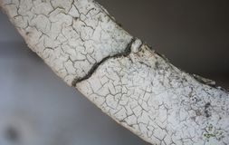 Άσπρος ραγισμένος τοίχος με το MOS και το μύκητα στοκ φωτογραφίες