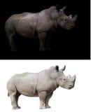 Άσπρος ρινόκερος στο σκοτεινό και άσπρο υπόβαθρο Στοκ Εικόνες