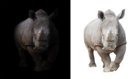 Άσπρος ρινόκερος στο σκοτεινό και άσπρο υπόβαθρο Στοκ Φωτογραφίες