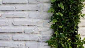 Άσπρος τουβλότοιχος με τις εγκαταστάσεις Στοκ φωτογραφία με δικαίωμα ελεύθερης χρήσης