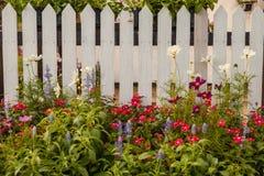 Άσπρος φράκτης με τα λουλούδια Στοκ Εικόνες