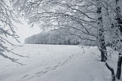 άσπρος χειμώνας τοπίων Στοκ φωτογραφία με δικαίωμα ελεύθερης χρήσης