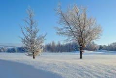 άσπρος χειμώνας Στοκ Φωτογραφία