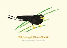 Άσπρος-eyed διάνυσμα κινούμενων σχεδίων ποταμός-Martin Στοκ Εικόνα