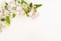 Άσπρο άκρο ανθών Crabapple άνοιξη στο άσπρο κλίμα τοίχων πινάκων με το δωμάτιο ή το διάστημα για το αντίγραφο, το κείμενο ή τις λ στοκ εικόνες