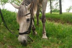 Άσπρο άλογο στοκ φωτογραφία με δικαίωμα ελεύθερης χρήσης