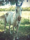 Άσπρο άλογο κάτω από το δέντρο στοκ φωτογραφία με δικαίωμα ελεύθερης χρήσης
