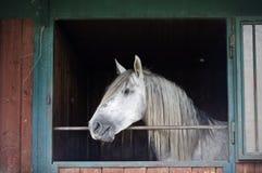 Άσπρο άλογο σε έναν σταύλο Στοκ φωτογραφία με δικαίωμα ελεύθερης χρήσης