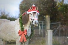 Άσπρο άλογο Χριστουγέννων με Santa& x27 καπέλο του s στοκ εικόνα