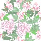 Άσπρο άνευ ραφής σχέδιο με τα ρόδινα peonies Στοκ Εικόνες