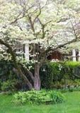 Άσπρο άνθισμα Dogwood στον πράσινο χορτοτάπητα στοκ εικόνες με δικαίωμα ελεύθερης χρήσης