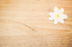 Άσπρο άνθος αποστήθισης Anemone Στοκ φωτογραφία με δικαίωμα ελεύθερης χρήσης