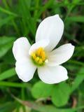 Άσπρο άνθος ορχιδεών στοκ εικόνες με δικαίωμα ελεύθερης χρήσης