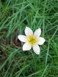 Άσπρο άνθος ορχιδεών στοκ εικόνα με δικαίωμα ελεύθερης χρήσης