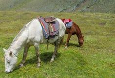 Άσπρο άλογο με τη σέλα στο πράσινο λιβάδι στοκ εικόνες
