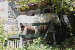 Άσπρο άλογο πίσω από ένα παλαιό σπίτι Στοκ Φωτογραφίες