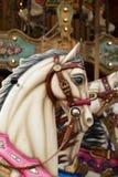 Άσπρο άλογο στο ιπποδρόμιο Στοκ φωτογραφία με δικαίωμα ελεύθερης χρήσης