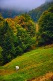 Άσπρο άλογο στο λόφο βουνών φθινοπώρου Στοκ φωτογραφία με δικαίωμα ελεύθερης χρήσης